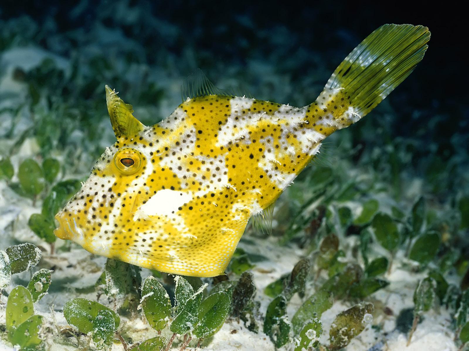 море, рыба, желтая