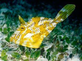 Заставки море, рыба, желтая
