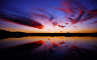 Бесплатные фото небо,голубое,тучи,облака,горизонт,деревья,лес