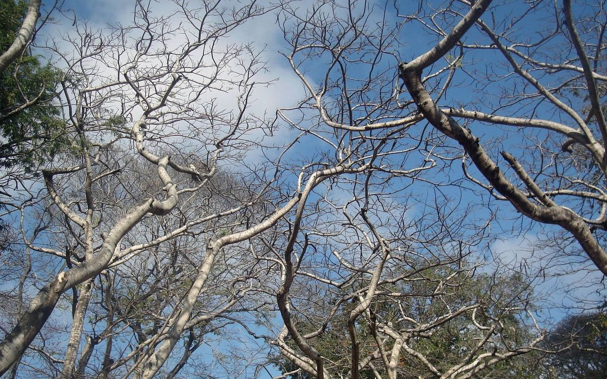 Фото бесплатно ветки, облака, осень - на рабочий стол