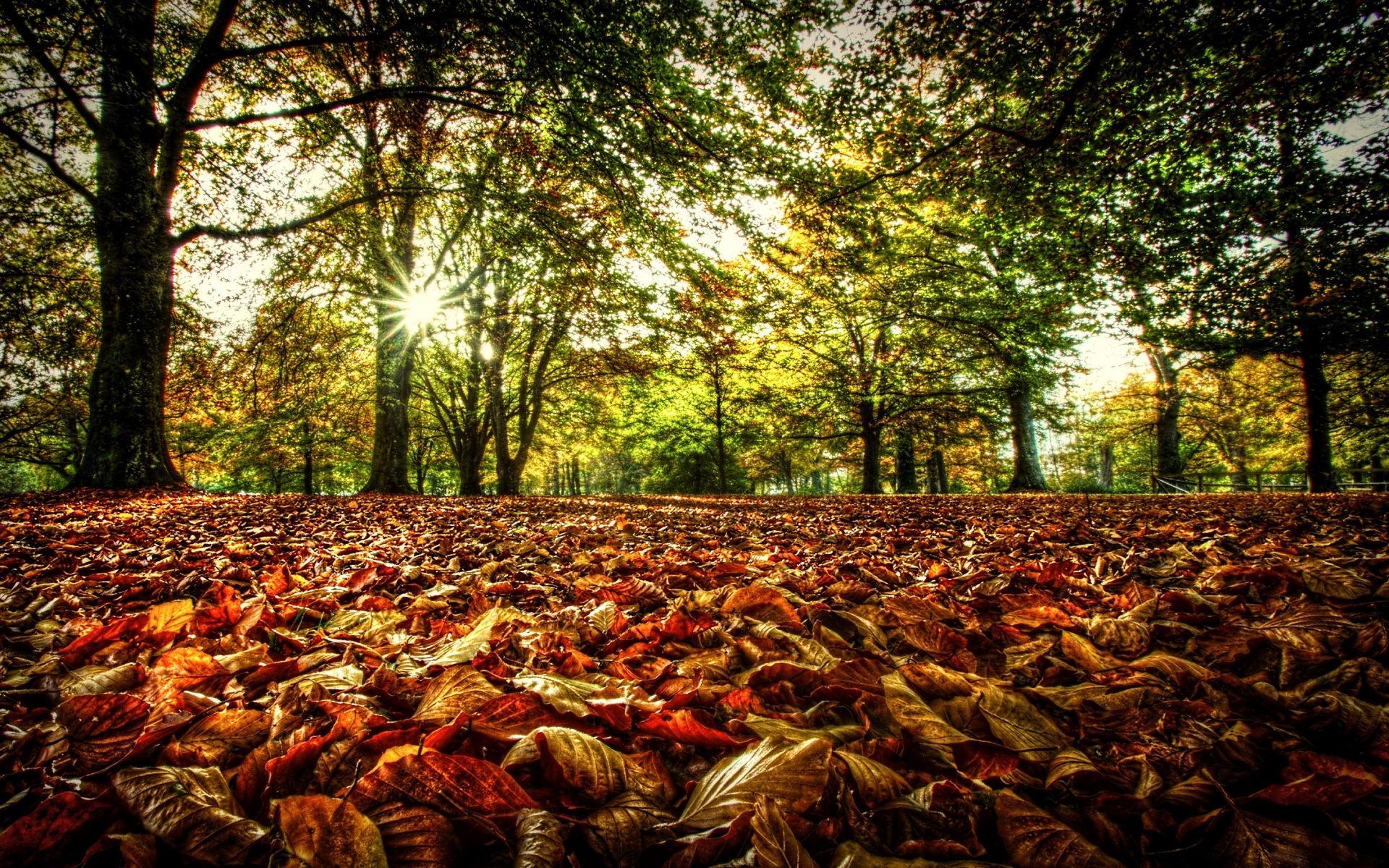 осень, листопад, листья