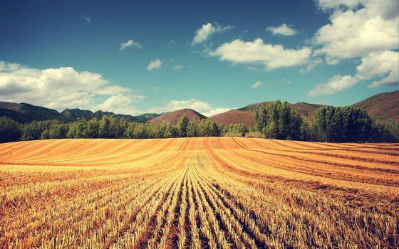 Бесплатные фото поле,пшеница,урожай,колосья,деревья,небо,холмы,природа,пейзажи