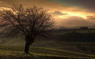 Фото бесплатно предгорье, холмы, дерево, ветви, растительность, горизонт, горы, небо, облака