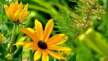 Заставки растение,лепестки,зелень,трава,стебель,лето,природа