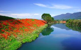 Фото бесплатно река, берег, дерево, цветы, красные, лепестки, дорога, природа