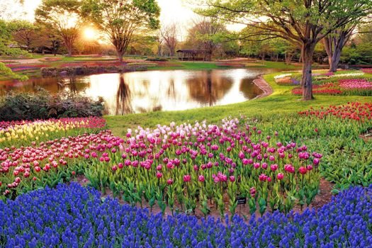 Заставки япония, парк, цветы