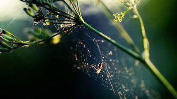 Фото бесплатно паук, паутина, стебель