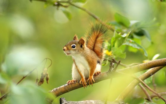 Photo free squirrel, wood, grass
