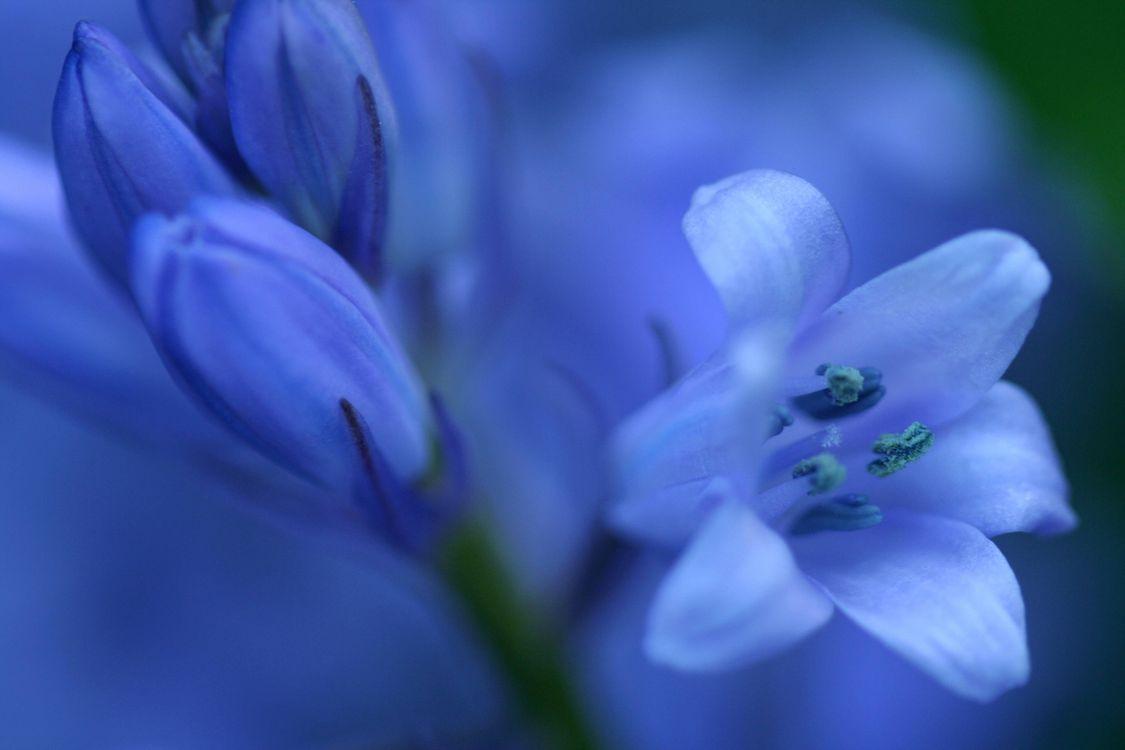 Фото бесплатно цветок, флора, макро - на рабочий стол