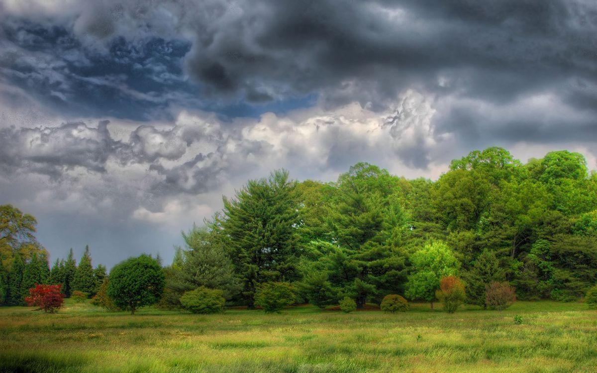 Фото бесплатно деревья, парк, ветки, трава, поле, луг, небо, облака, тучи, лето, тепло, природа, пейзажи, пейзажи - скачать на рабочий стол