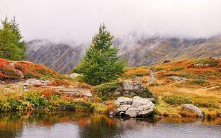 Фото бесплатно елка, река, вода