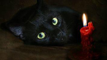 Бесплатные фото кот,черный,морда,глаза,зеленые,свеча,красная