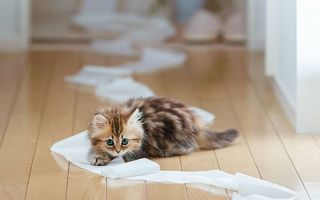 Фото бесплатно котенок, шкодит, играет