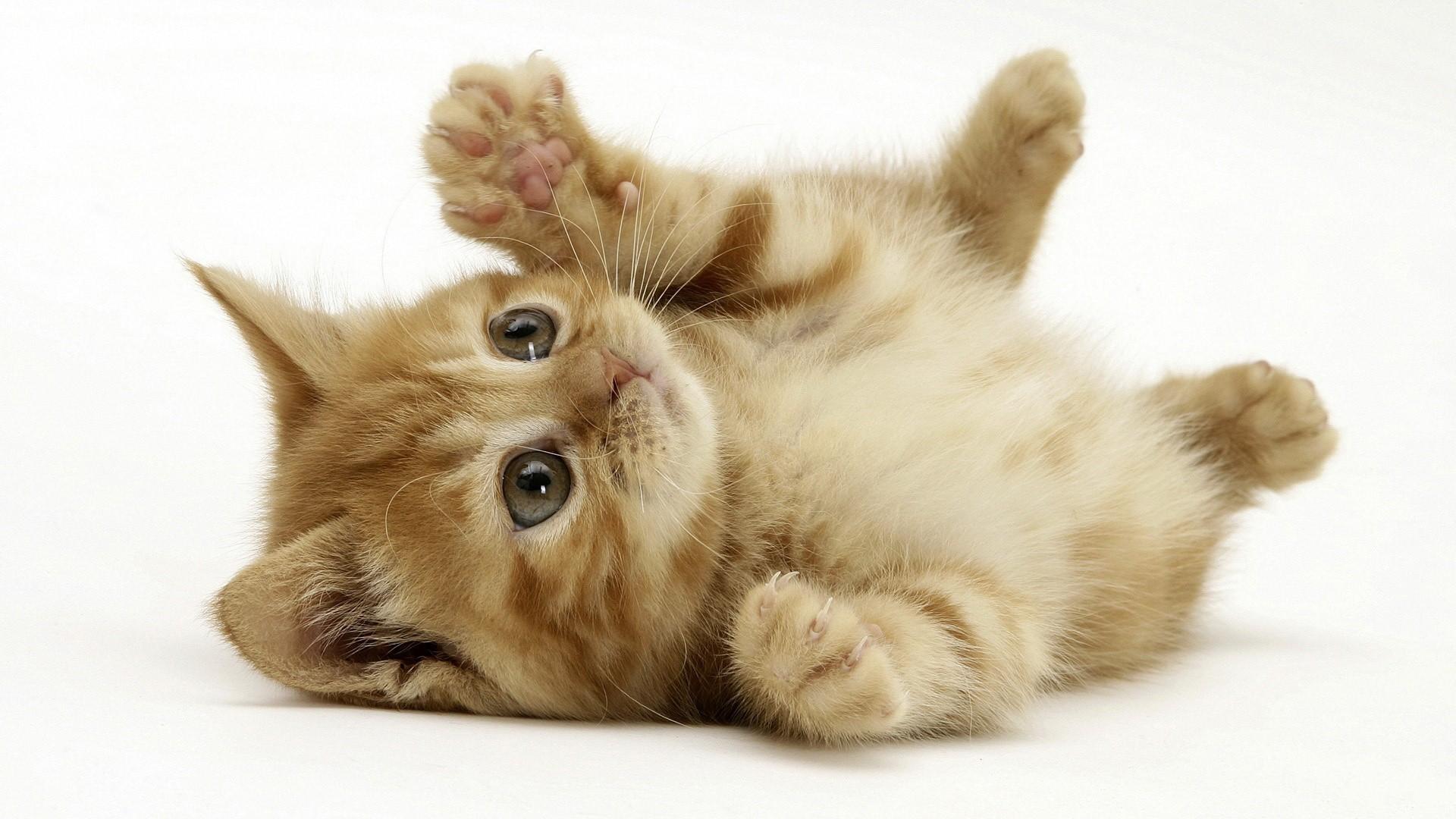 Обои котенок, рыжий, играет, лапки