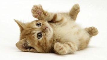 Бесплатные фото котенок,рыжий,играет,лапки,глаза,белый,фон