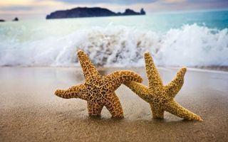 Бесплатные фото море,океан,пляж,берег,песок,звезда,камень
