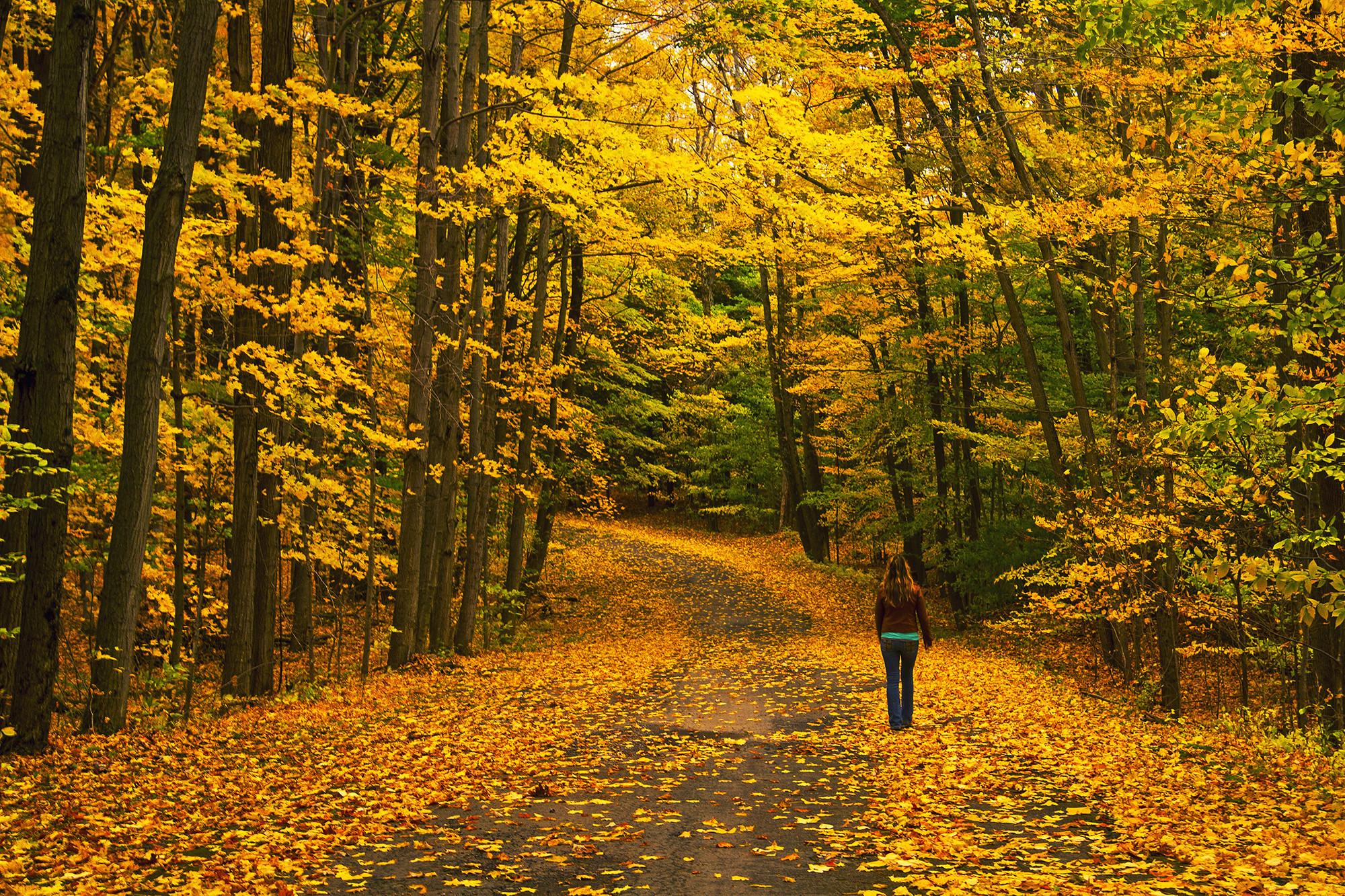 обои осень, дорога, лес, деревья картинки фото
