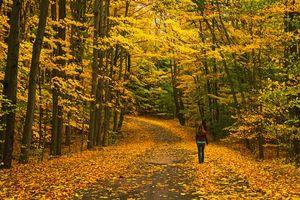 Заставки осень,дорога,лес,деревья,пейзаж
