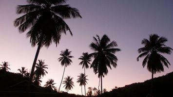 Фото бесплатно пальмы, сумерки, небо, красиво, темно, деревья, природа