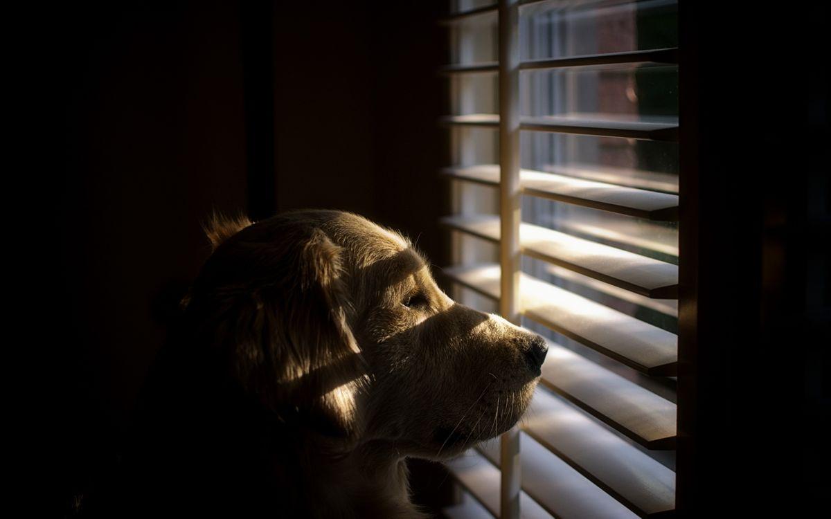 Фото бесплатно пес, окно, жалюзи, лучи, солнца, закат, настроение, собаки, собаки