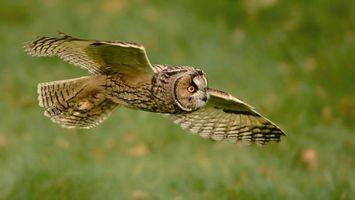 Бесплатные фото полет совы,сова,крылья