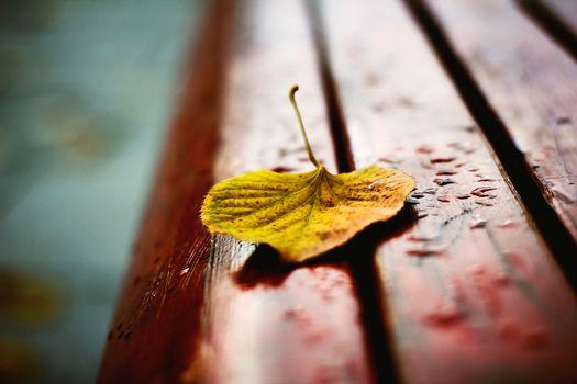 скамейка, листик, осень, желтый, увядший