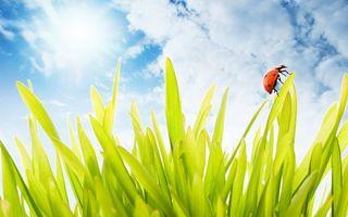 Фото бесплатно трава, небо, облака