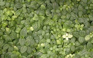 Фото бесплатно трава, цветы, листики