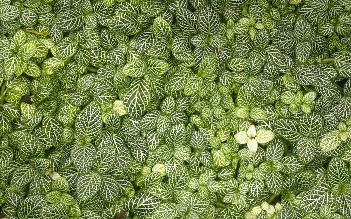 Фото бесплатно трава, цветы, листики, листья, ветки, цветок, узор, белый, цвет, зеленый, цветет, макро, природа, природа - скачать на рабочий стол
