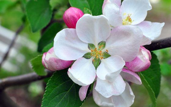 Бесплатные фото цветки,лепестки,листья,ветки,бутоны,весна,тепло,аромат,цветы