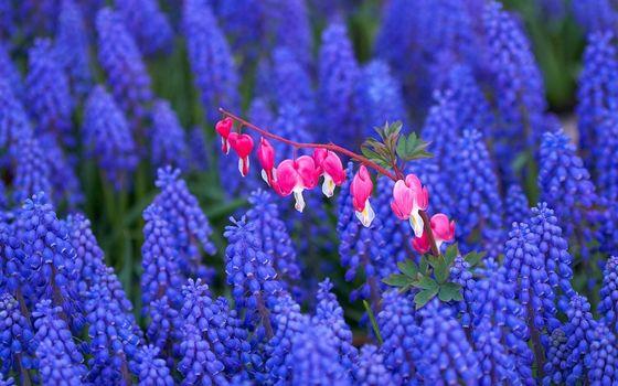 Заставки цветки, стебли, синие