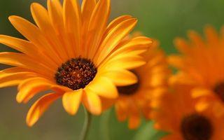 Бесплатные фото цветы, лепестки, оранжевые, тычинки, стебли