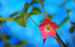 Фото бесплатно зелень, цветы, природа
