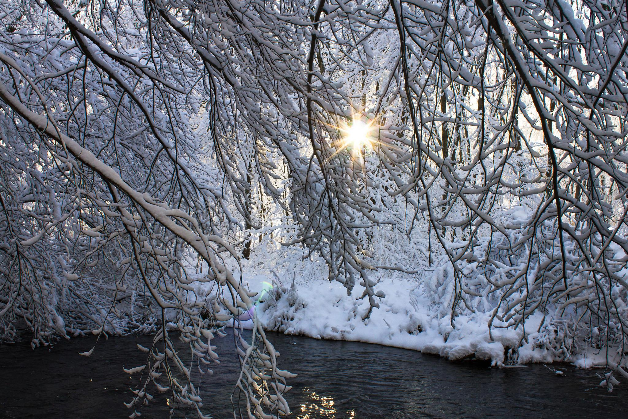 обои зима, река, деревья, иней картинки фото