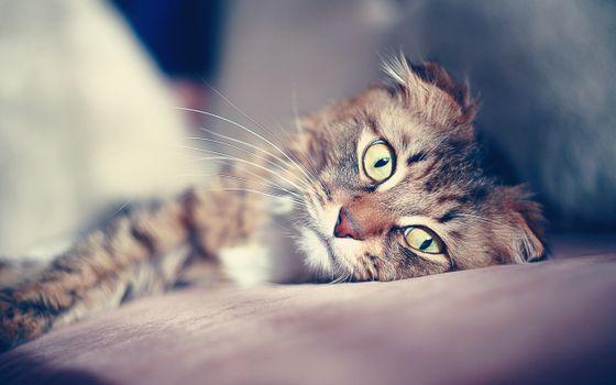 Photo free folding, coziness, cat