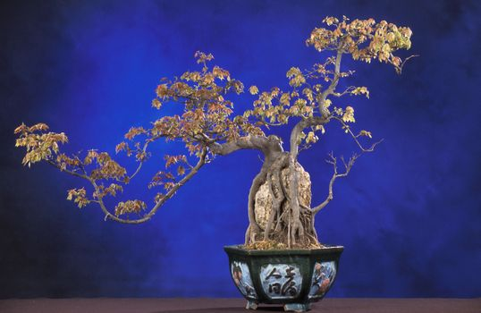 Photo free bonsai, tree, basin