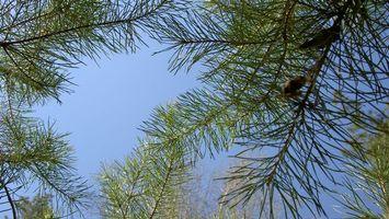 Фото бесплатно иголки, елка, ветви