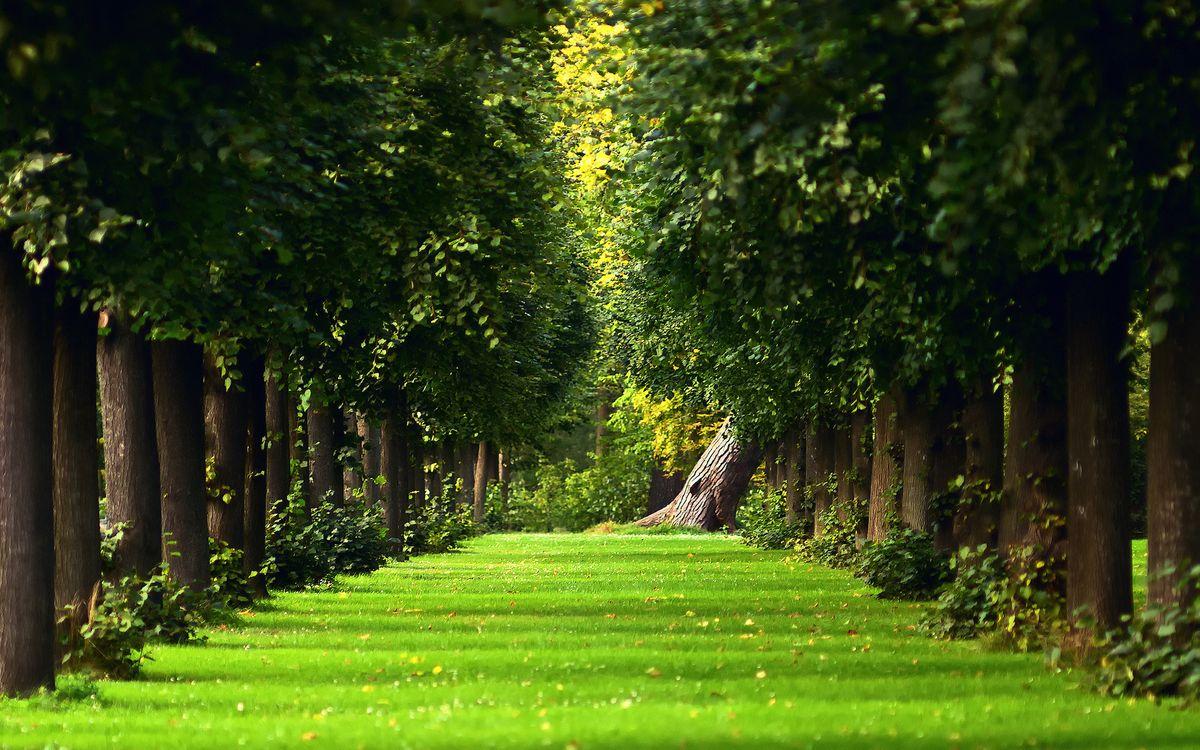 Фото бесплатно аллея, парк, старые, деревья, трава, лето, зелень, природа, природа