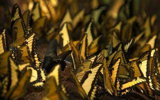 Заставки бабочки,крылья,рисунок,узор,лапки,усики,стая