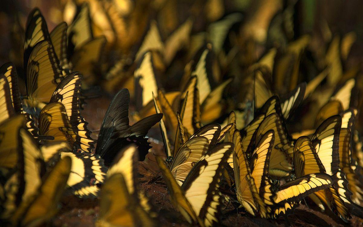 Фото бесплатно бабочки, крылья, рисунок, узор, лапки, усики, стая, семья, насекомые, насекомые