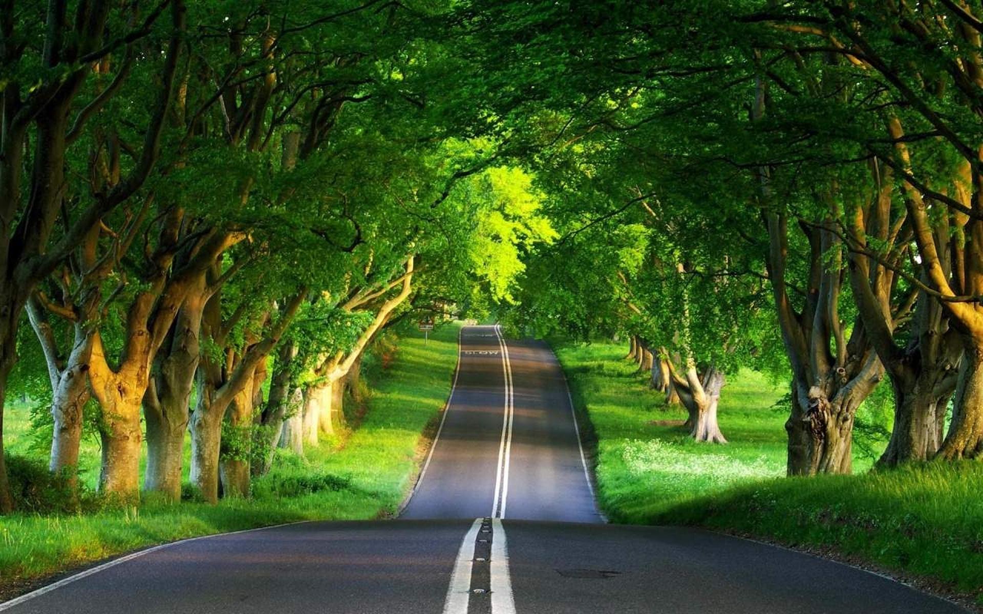 обои дорога, асфальт, разметка, трава картинки фото