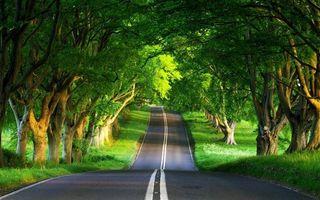 Бесплатные фото дорога,асфальт,разметка,трава,деревья,листва,пейзажи