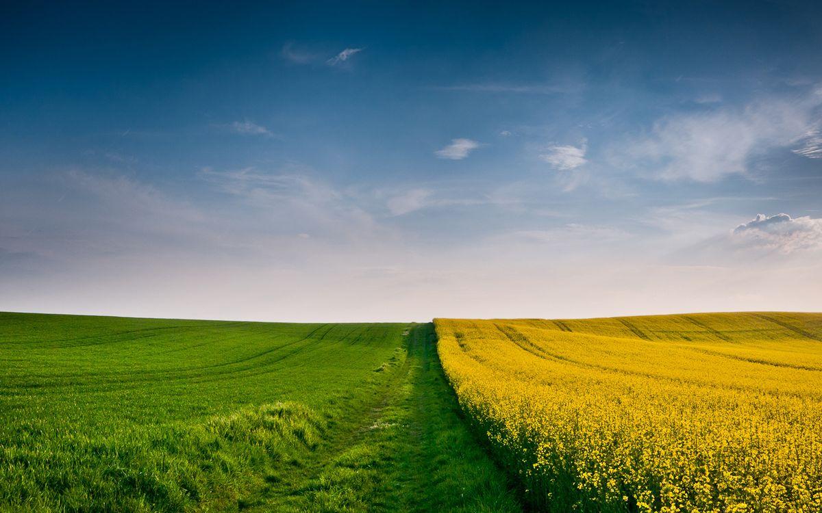 Фото бесплатно дорога, трава, зеленая, поле, рапс, горизонт, небо, пейзажи, пейзажи - скачать на рабочий стол