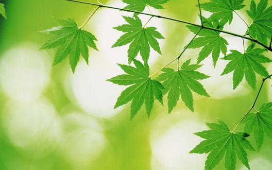 Заставки листва, зелень, яркие