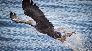 Фото бесплатно клюв, крылья, вода