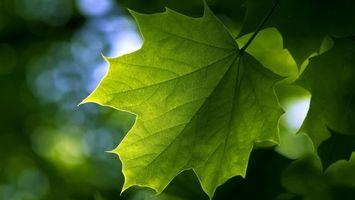 Бесплатные фото лист,зеленый,прожилки,свет,солнца,природа,макро