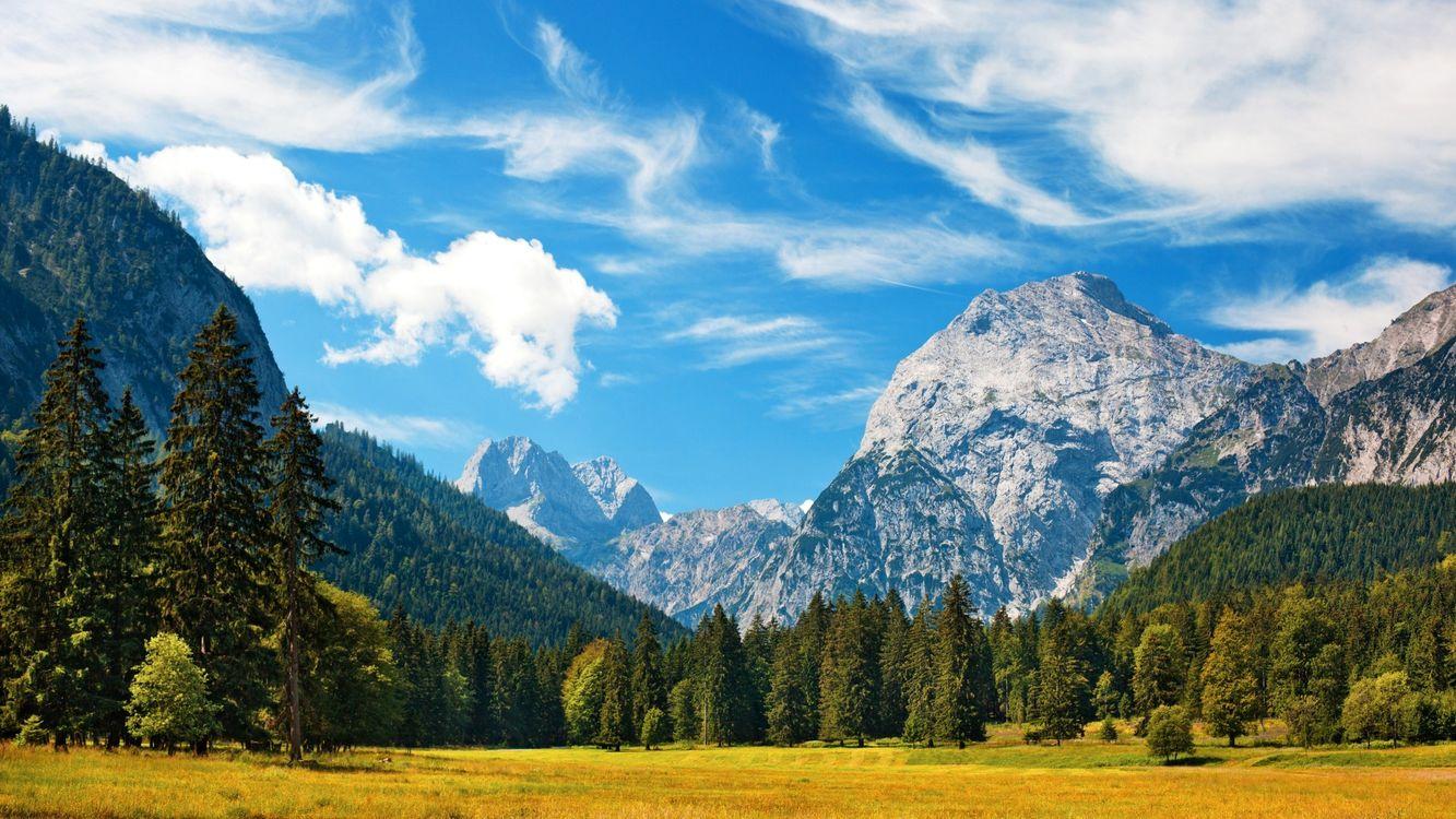 Фото бесплатно поле, трава, лес - на рабочий стол