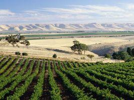 Фото бесплатно поле, зелень, холмы