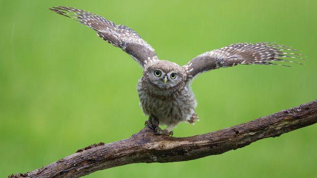 Бесплатные фото птица,сыч,хищник