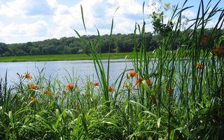 Фото бесплатно река, деревья, лес, цветки, листья, трава, вода, небо, пейзажи